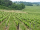 FRANCS : le vignoble