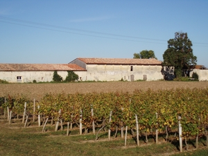 vignoble de saint louis de Montferrand